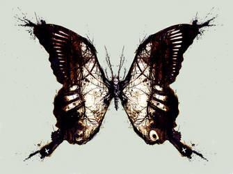 Butterfly by Jackovdaily