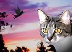 flying cat version1