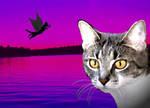 flying cat version 2
