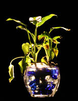 water loveing plant by tash11