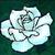 White Rose by neonchrysocyon