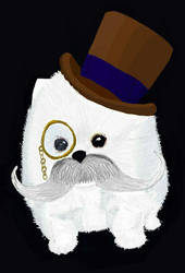 fluffy top hat puppy