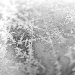 Frost 1 by mikegoodwin