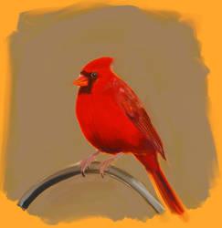 Northern Cardinal speedpaint by stemacdonald