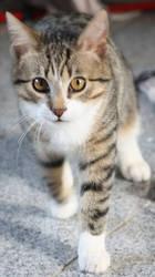 cute cat by JayBee5