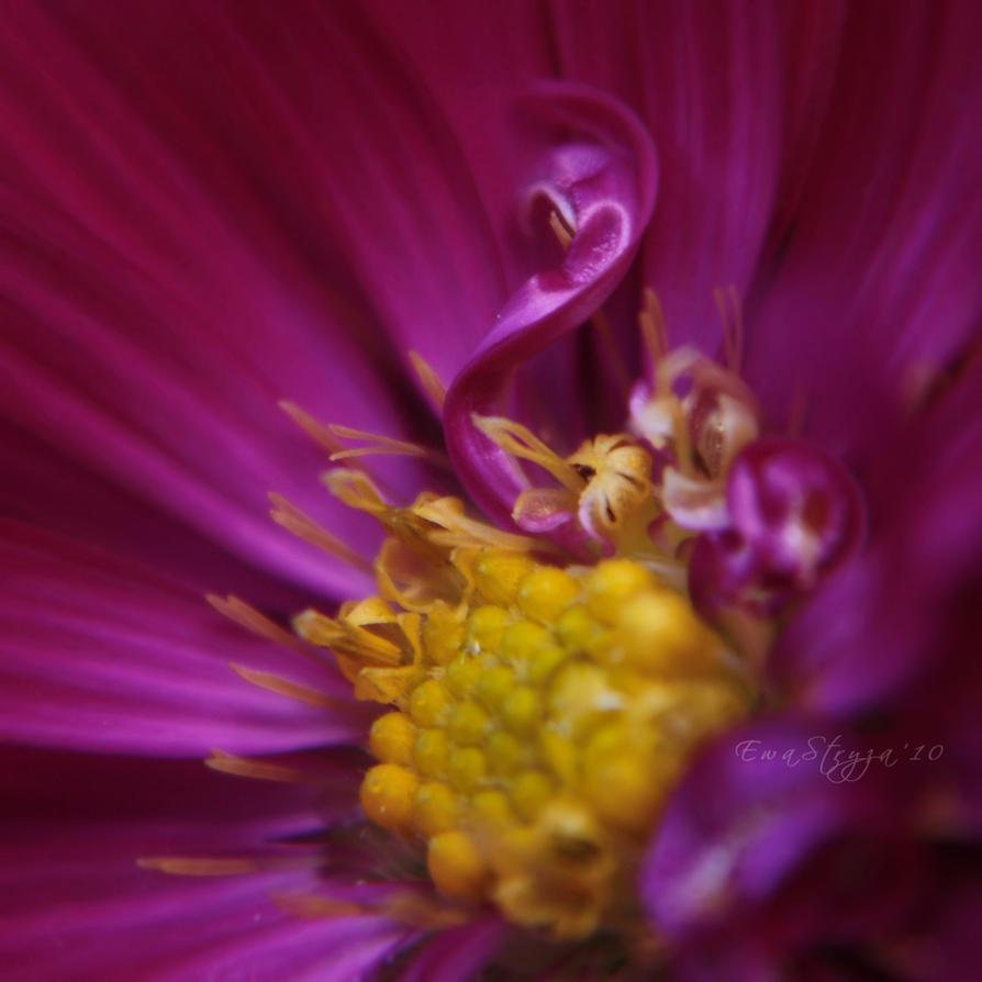 .PurpleLove. by SilenBlues