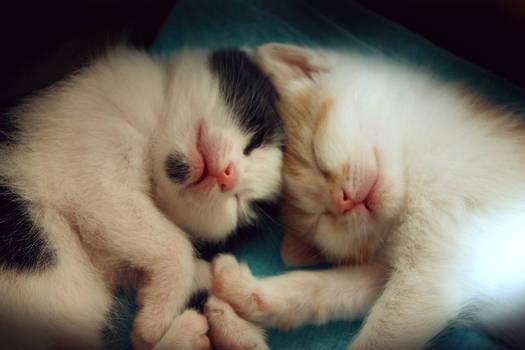 Kittens by NatalieCartman