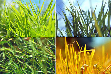 Grass mood by NatalieCartman