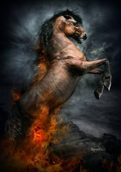 Horse, Storm
