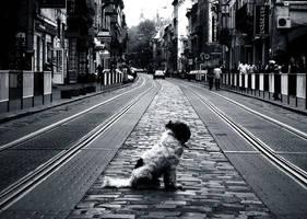 Street Dog by Pippinek