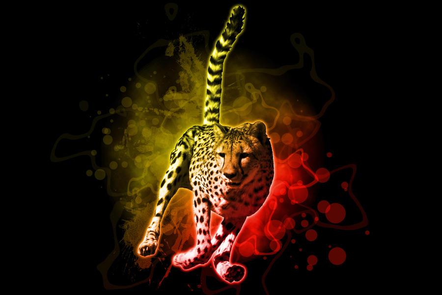 Cheetah Image by kwillson