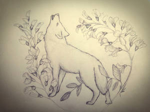 Wolf In The Flowers Of Acacia