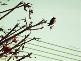 Hello bird by heartpolkadotts