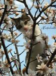 Blossum kitten.