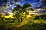 Tree by jumbo71