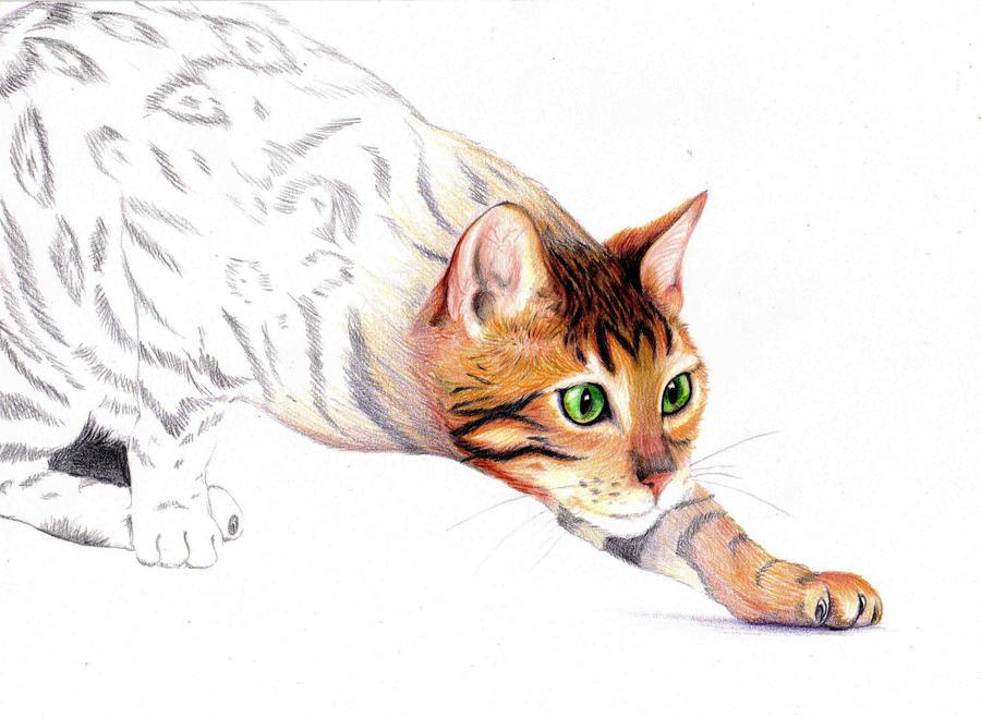 Felis catus complete by Dark-hell