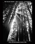 Muir Woods - Mill Valley Ca. 9