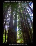 Muir Woods - Mill Valley Ca.11