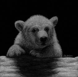 Arctic Moonlight  by skydriane