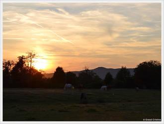 Horses at Sunset by GraszlCristina