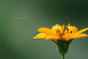 Golden by PiecesOfAnsley