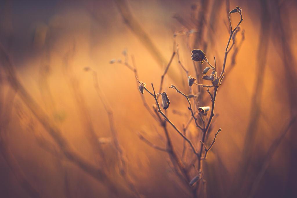 Dusk by PiecesOfAnsley