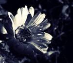 A Flower. by MateuszPisarski