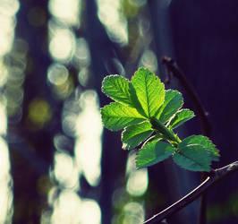 .: Spring :. by MateuszPisarski