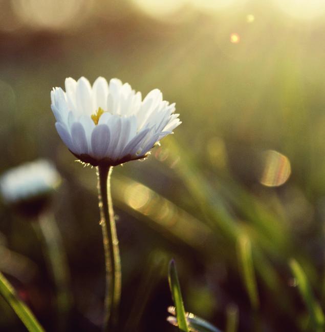 Sunshine II by MateuszPisarski