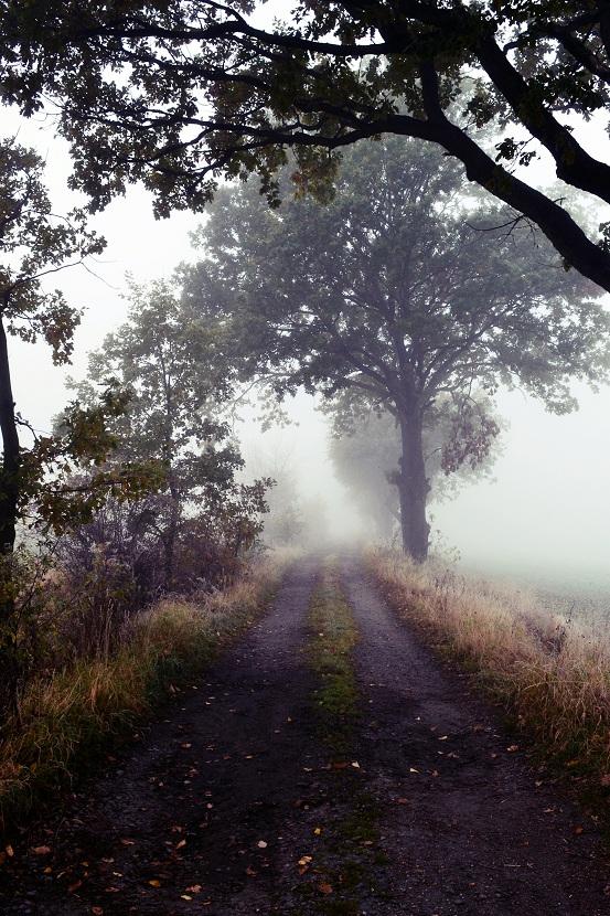 Foggy day. by MateuszPisarski