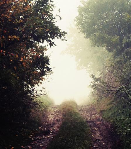 Magic Path by MateuszPisarski