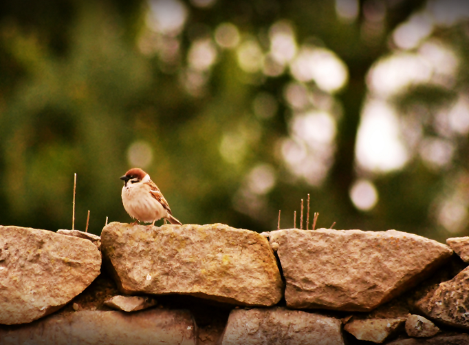 Sparrow. by MateuszPisarski