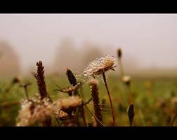 nature love by MateuszPisarski
