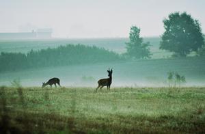 Walking in the mist.