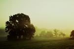 misty fields cold.