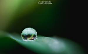 Nature Perfection. by MateuszPisarski