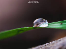 Pure Drop. by MateuszPisarski