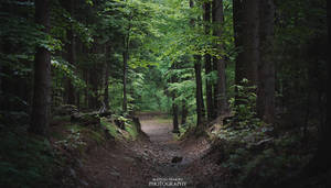 Green World. by MateuszPisarski
