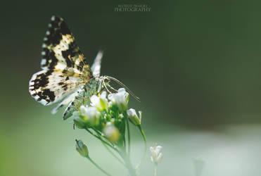 Flower hunter by MateuszPisarski