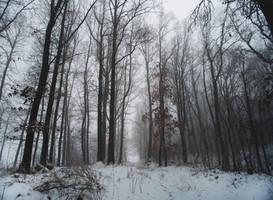 Misty Woodland. by MateuszPisarski