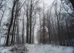 Misty Woodland.