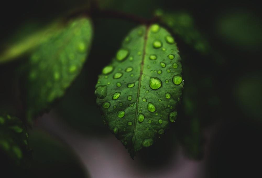 Green softness. by MateuszPisarski