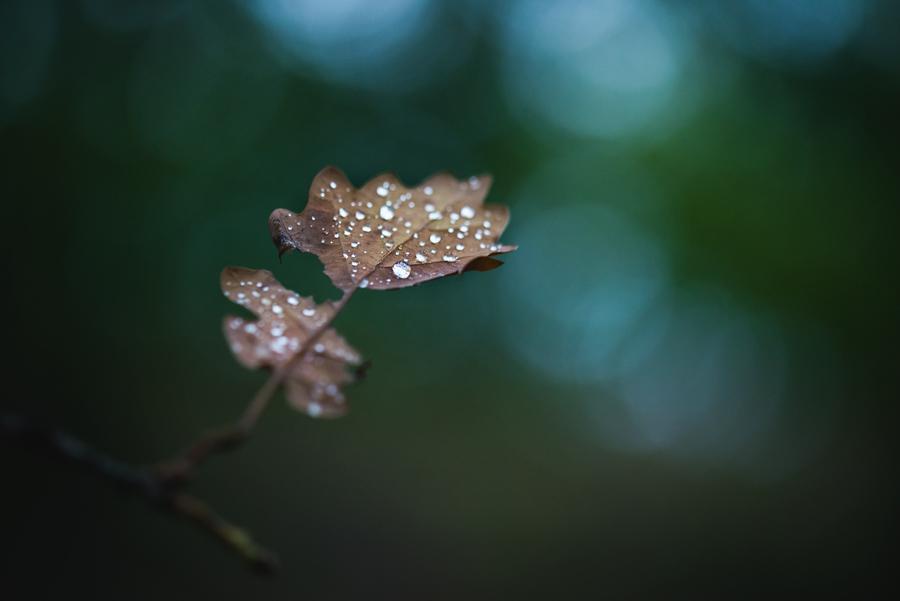 Autumn leaf. by MateuszPisarski