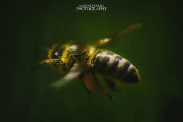 Bee in flight. by MateuszPisarski