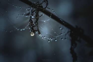 Dark Droplets.