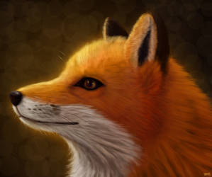 Practice (Fur)