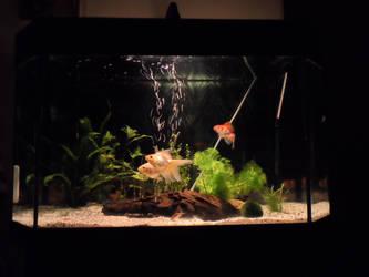 Aquarium Goldfishes by RiseOfInformation