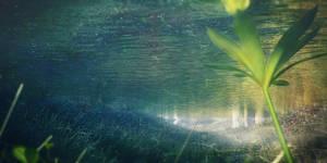 Scene-underwater01
