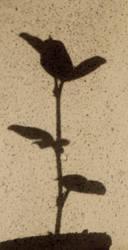 shadow imprint by jumana-b
