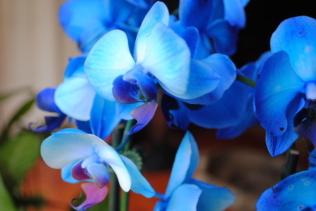 More Blue Orchids By Kupocola On Deviantart